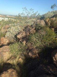 Falcon Hill, Mesa, AZ