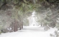 snow storm photo