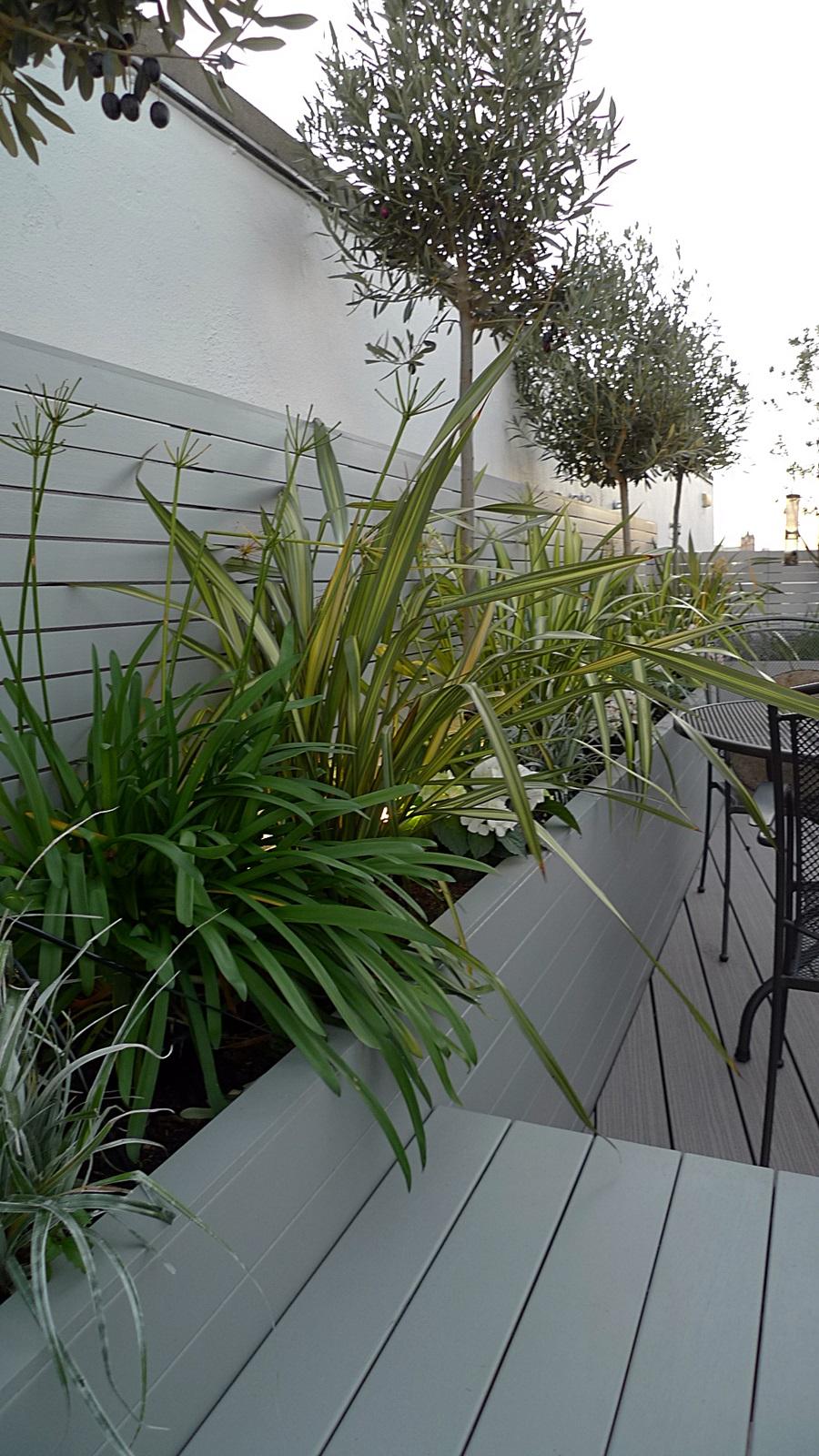 Modern Garden Plants