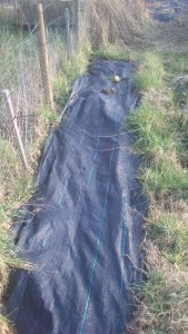 A bed covered by weed-control fabric.