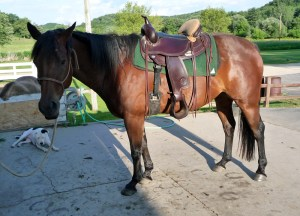 Handsome Jimmy Dean under Saddle