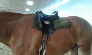 horse_army_blanket3