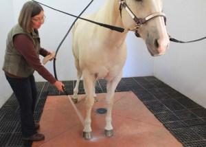 Hosing the hoof can help moisturize.