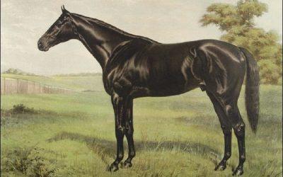 dark shiny horse old school