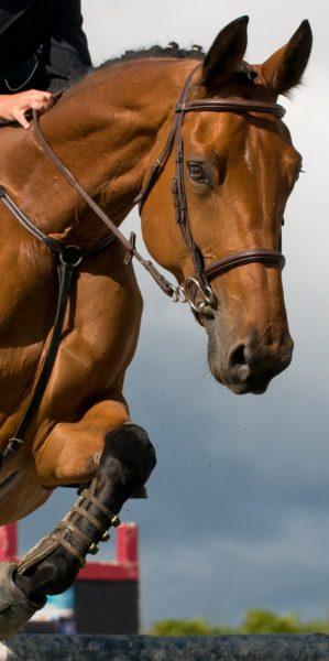 horses jumping show jumping brushing boots