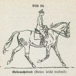 german cavalry trot HDV12