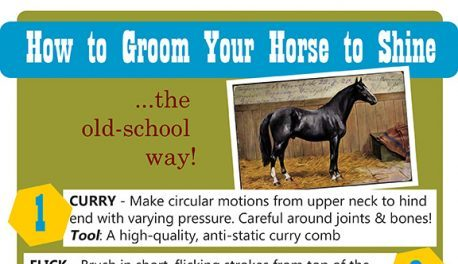how to groom your horse