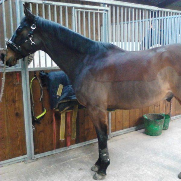 bucking thoroughbred horse