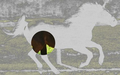 horse stifle