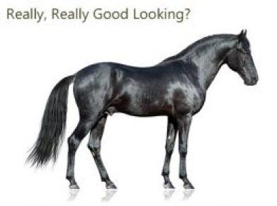 a black shiny horse