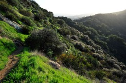 Backside trail on Mt. Lee, Griffith Park, Los Angeles