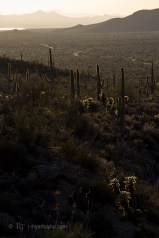 Saguaro National Park, AZTucson, AZ