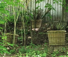 Basket in fork of branches