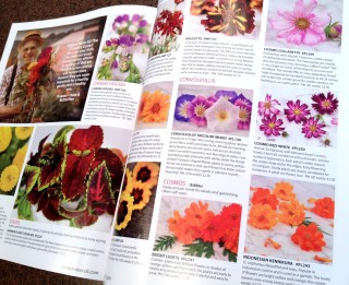 Pages showing flowers