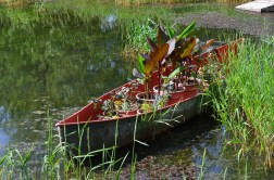 An old canoe is filled with containers of plants including cannas.