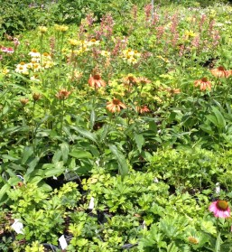 Pots of plants for sale at Lost Horizons look like a field of wildflowers