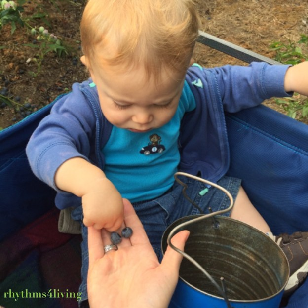 blueberry picking, outdoor fun, family bonding, young children
