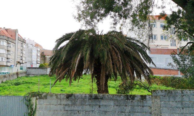 La palmera de Labarta hoy 30 de Octubre