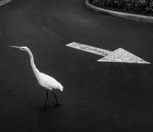 Fotografía de José Ney, incluida en el Top 10 de fotógrafos en blanco y negro de Estados Unidos por One Eyeland