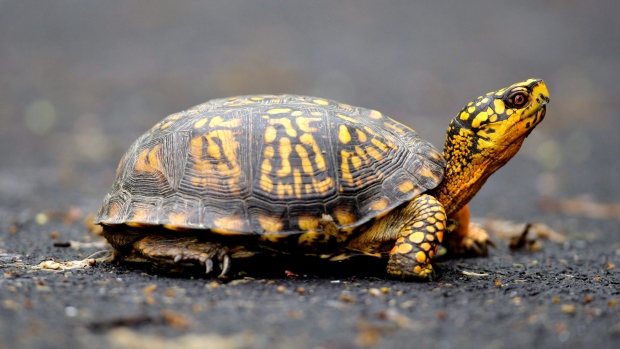 Transformation Happens Tortoise Style