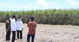 Jokowi ke kebun tebu