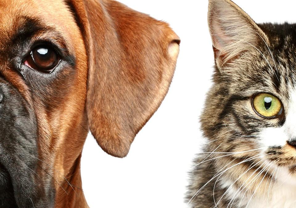 Ribeirão Pires promove Campanha de Vacinação Antirrábica de cães e gatos