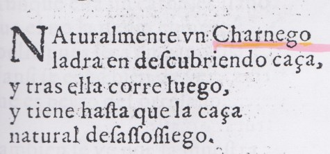 charnego-valenciano