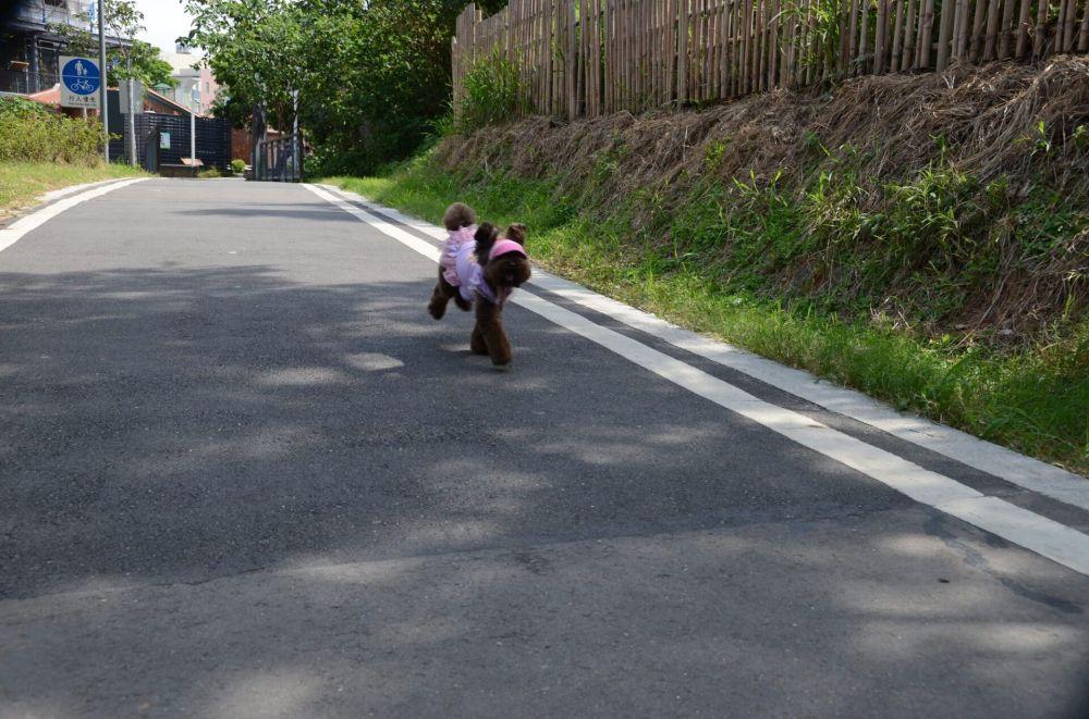 老街溪步道_桃園_03.JPG