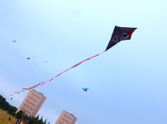 Kites in Bellahouston Park