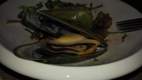Green Lipped New Zealand Shells