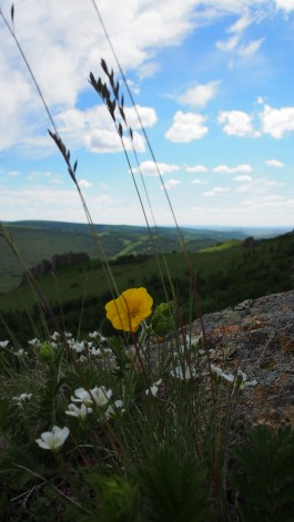 Flower with a view.