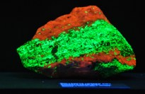 Fluourescent rocks and minerals in the Fluorescent Exhibit Room at the Rice Northwest Rock and Mineral Museum.
