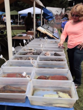 Rocks in display in bins at Summer Fest.