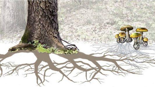 Wood Wide Web - la rete legnosa tra piante per comunicare fra loro