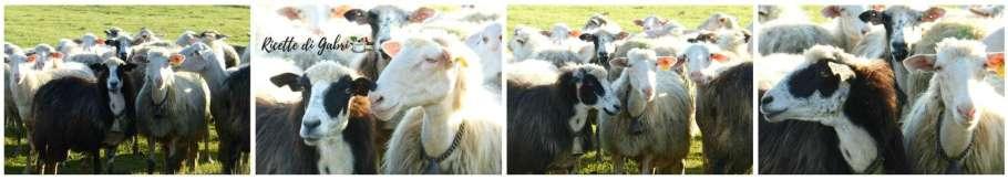 pecore petegolezzi