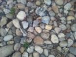 Pebbles photoshop free texture