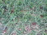 Green grass free photoshop texture