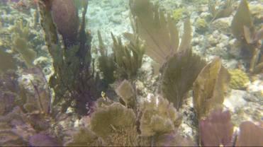 Some more corals