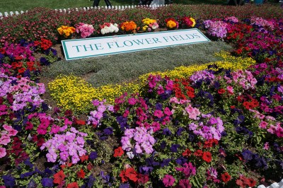 The Carlsbad Flower Fields Entrance