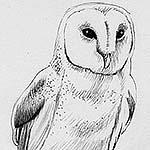"""Extrait du dessin d'un oiseau, réalisée au stylo-bille noir sur papier blanc, par Richard Martens, pour #INKtober2016 nº 13 : """"???""""… Un rébus ! #thefrenchINKtober #thefrenchINKtober2016 #INKtober #INKtober2016 @jakeparker #RichardMartens"""