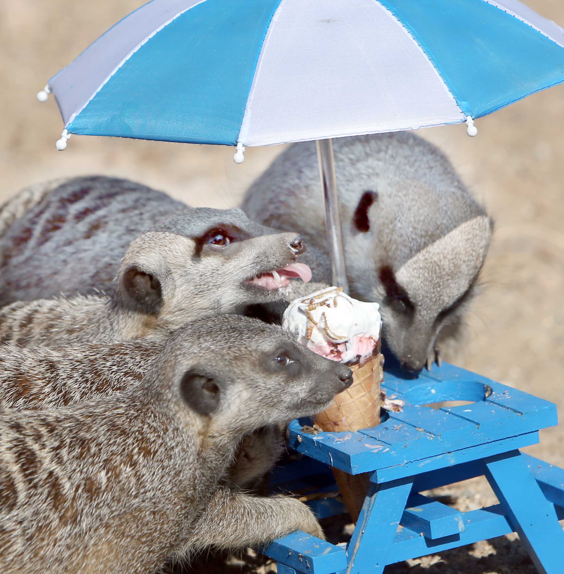 Animals Cool Down At Crealy Great Adventure Park Near Exeter