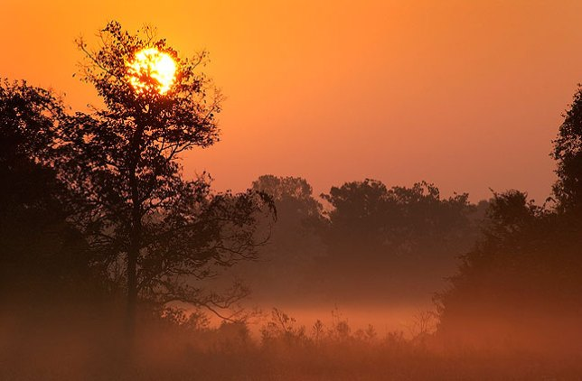 """Sunrise, Sandy Creek bottom, Ada, Oklahoma, summer 2007. This was the first image I used in the Ada Magazine feature """"Something Beautiful."""""""