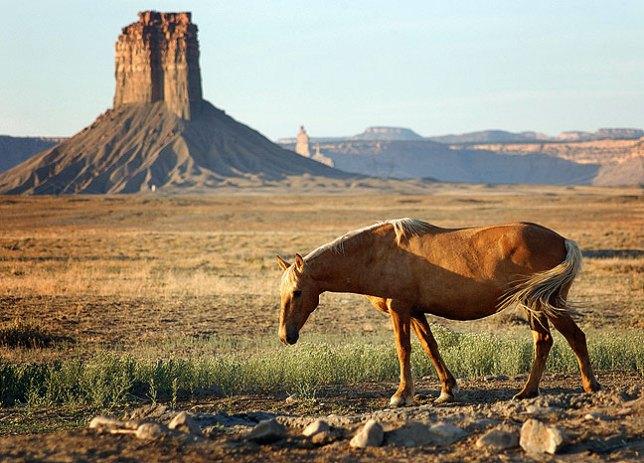 Horse, Chimney Rock, New Mexico, summer 2007.