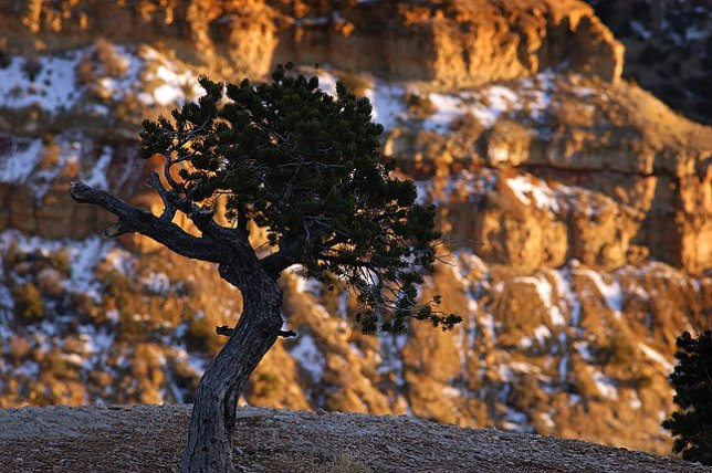 Tree near Ghost Rock in Utah's San Rafael Swell, 2006; like most images, this one is successful because of light and composition, not pixel count or frame rate
