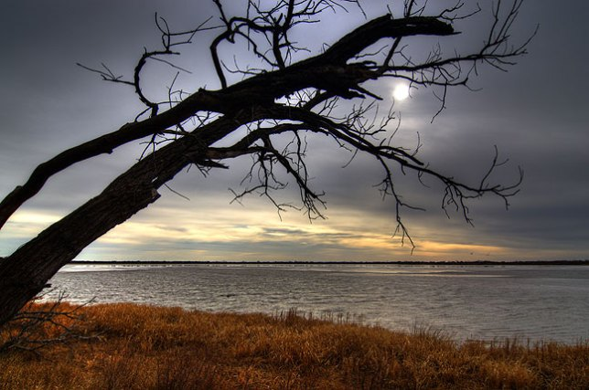 A high dynamic range image of a tree and the sun on the shoreline at Great Salt Plains Lake.