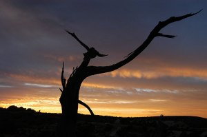 Dead tree and sky, Arches National Park, Utah, October 2004; my wife thinks this tree looks like a bird of prey. Great lines and light, not quite top five.