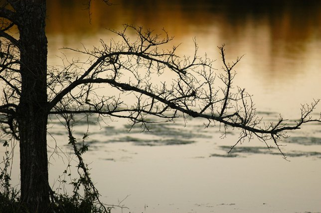 This image of a tree silhouetted against a pond at sunset was made with the Nikon D100.