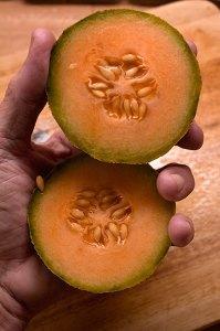 Cantaloupe about as big as a tennis ball