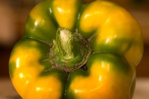 Ripening bell pepper from the garden