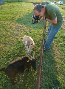 Matthew photographs Coal and Buxton the goats last night.